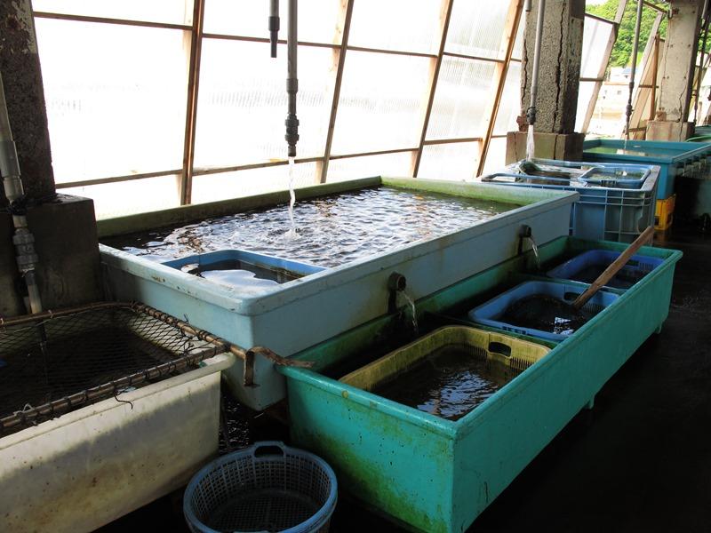 魚市場内の水槽